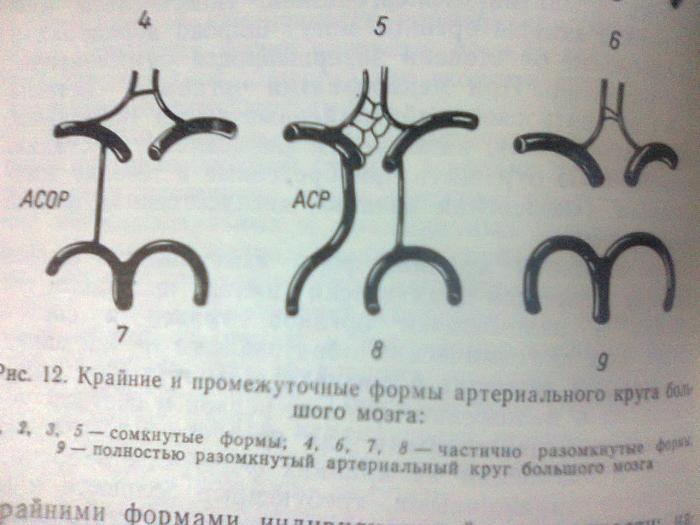 Круг Виллизиев